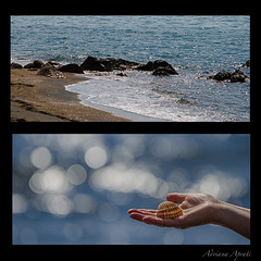 Una giornata al mare, 27 marzo 2016 (adrianaaprati) Tags: sea mer beach meer mare bokeh shell calma conchiglia coquille schale allaperto