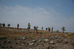IMG_7629 (chupalo) Tags: forest cacti lavarocks islasplaza