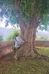 CP -014 Cuba. A rest under the tree (Clare Pickett) Tags: painterly man tree bag box cuba rubbish worker cuban