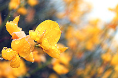 The Yellow Florals (Faiz (Faizan)) Tags: life california flowers abstract flower color detail green art love home nature beauty leaves fauna contrast outside flora friend natural earth birth joy diversity happiness calm hills difference environment essence attention catchy lively calmness aesthetic generosity greenry lifepath
