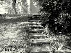 the old steps (josefinenylander) Tags: city blackandwhite cats cute nature stairs cat documentary