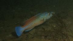 Blackhawk05 (MatYts) Tags: boat ship diving shipwreck solo bow blackhawk wreck swanage charters