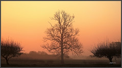 Left And Right. (Picture post.) Tags: morning trees mist green nature sunrise landscape interestingness fields paysage arbre springtime