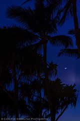 DSC_6714.jpg (Cameron Knowlton) Tags: old trees vacation usa tree palms hawaii nikon maui palm palmtrees luau palmtree lahaina 2016 oldlahainaluau d610