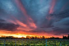 (elea_flore) Tags: de soleil vignes lever vignobles