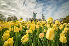 Moses (bprice0715) Tags: flowers green nature colors beautiful beauty yellow canon outdoors spring colorful tulips vibrant springtime washingtonpark naturephotography beautyinnature canoneos5dmarkiii canon5dmarkiii