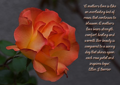 A Mother's Love (Jo-Warming Up To The 80's :)) Tags: orange rose quote mother middlename poetography