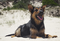 Tota (GaboUruguay) Tags: hairy dog pet beach happy mix sand shepherd sheepdog playa save arena perro breed adopt pastor mascota tota contento cruza barbilla adopta