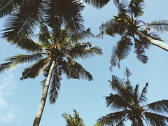 (ririnrynsr) Tags: leica sky tree nature coconut chill