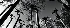 Metal Birds (pho-Tony) Tags: film 35mm lens lomo lomography horizon 28mm ishootfilm swing vista swinglens analogue 135 agfa russian malaga perfekt horizon202 202 industar poundland c41 russiancameras kompakt filmisnotdead tetenal  horizon perfeckt  202