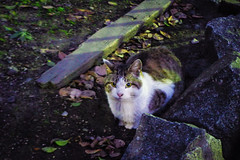 Today's Cat@2016-01-14 (masatsu) Tags: cat pentax cc100 catspotting mx1 thebiggestgroupwithonlycats