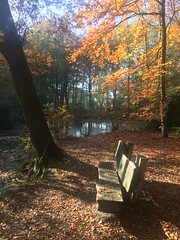 Forest bench (uitdragerij) Tags: forest bench bos bankje