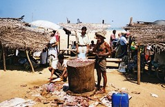 Gambia, fish market (rossendale2016) Tags: sea fish beach for seaside fishing sand market sale knife chopping gambia knives selling seller fishmonger skill fillet filleting