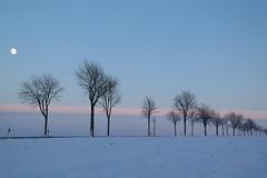 Moonlight in winter (Explored) (uwe20) Tags: schnee sky moon tree germany deutschland outdoor baum vollmond niedersachsen salzdahlum
