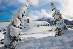 Snowed Inn (b#Photo) Tags: winter snow tree snowshoe washington nationalpark nikon paradise mountrainiernationalpark bent paradiseinn bsharpphoto