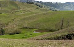 Aquila Loop Pond (LeftCoastKenny) Tags: trees grass pond hills sierravistaopenspacepreserve aquilalooptrail