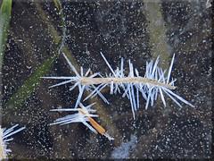 .....collezione inverno (l' Eu_genio) Tags: brina ghiaccio cristalli
