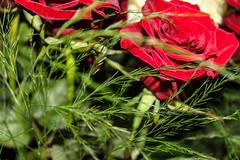 Flowers (kheibrock) Tags: silberhochzeit