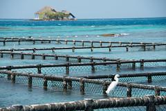 Oceanario I (Javier Pimentel) Tags: sea mar colombia isla kolumbien oceanario garza islasdelrosario