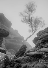 Tree-in-Fog (petefoto) Tags: trees winter mist fog ancient rocks yorkshire boulders brimhamrocks platinumheartaward nikond810