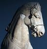 British Museum, Chariot Horse (AnthonyR2010) Tags: sculpture horse london museum turkey greek tomb mausoleum bloomsbury marble britishmuseum chariot bodrum halicarnassus