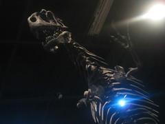 IMG_4184 (FigmentJedi) Tags: minnesota dinosaurs sciencemuseumofminnesota