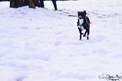 "Il cane da ""slitta"" (Daniela Miano) Tags: winter people italy snow cold animal neve freddo fiocchi"