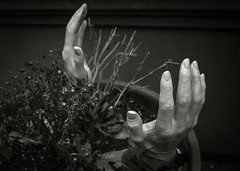 So Eerie, M'dearie (Dorchester (Mildred Alpern)) Tags: blackandwhite monochrome leaves outdoors hands fingers dirt stems flowerpot driedflowers