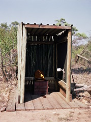 The women's toilet (chillbay) Tags: africa southafrica toilet outhouse krugernationalpark kruger tandatula krugerafrica