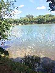 Passeio no Ibirapuera (Lucas_Araujo94) Tags: park parque brazil sopaulo ibirapuera parqueibirapuera