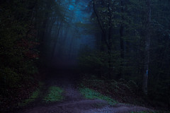 Crossroads (Netsrak) Tags: blue trees light mist tree fog forest way woods nikon nebel darkness path eifel crossroads wald bume baum weg d3200