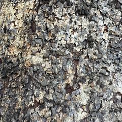 fp020516-15 (fontplaydotcom) Tags: texture bark