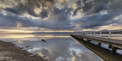 the log (images-by-TLP) Tags: sunset water clouds reflections cloudporn lakeillawarra timlashbrookphotography imagesbytlp