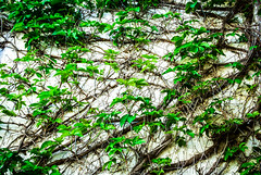 sony dsc002573 (Ricymar Photography (Thanks to all the fans!!!!)) Tags: wallpaper nature landscape creta crete sonydslr isladecreta islandofgreece islandofcrete