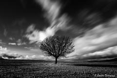 Pretérito (AvideCai) Tags: blancoynegro arbol bn cielo nubes largaexposición sigma1020 sobarriba avidecai