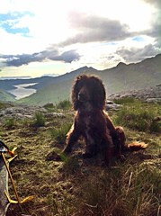 A Ruff camp in the Rough Bounds one lovely summer (Turnertower) Tags: na rough loch cockerspaniel nevis knoydart bounds coire ciche colemantents