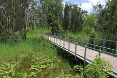 Mamukala Wetlands, Kakadu (cathm2) Tags: travel trees green nature nationalpark nt australia wetlands kakadu northernterritory wetseason mamukala