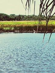 2016-03-19_12-54-41 (Alisson Assuno fz150) Tags: do z mangue