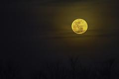 Worm moon poetry - March 2016 (yeahbouyee) Tags: moon lune mond luna full worm unanimous yeahbouyee
