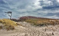 Weststrand von Prerow (garzer06) Tags: nature strand deutschland sand natur himmel wolken blau prerow baum naturephotography weststrand mecklenburgvorpommern strandsand landscapephotography naturfotografie wolkenhimmel landschaftsfotografie vorpommernrügen weststrandprerow