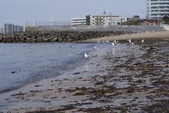 大野海水浴場 (osagoto1122) Tags: sea beach 海 かもめ 砂浜