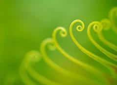 Let's Twist (sandraburns) Tags: plant macro green nature gardens outside nikon twist twirl tamron 90mm macrophotography