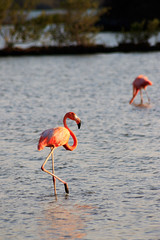 Flamingos (jeandubrulee) Tags: bird netherlands dutch birds animal san flamingo sint flamingos tourist curacao caribbean curaao antilles antillen caribisch willbrordus williwood willibrordo