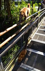 Coates (Jorgelina Dromedari) Tags: naturaleza argentina brasil waterfall natural selva waterfalls cataratas iguazu misiones parquenacional cataratasdeliguazu parquenacionaliguazu