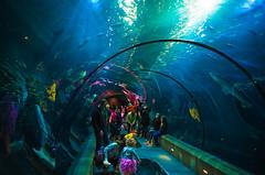 IMGP5327 (cimp8499) Tags: aquarium shark underwater newport oregoncoast newportaquarium newportoregon underwatertunnel