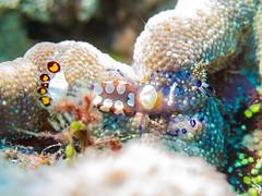 IMG_0854 (eye[4]eye) Tags: egypt diving gypten tauchen bluewaves