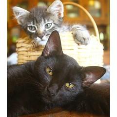 2015-12-02_1449072696 (Mama Gipsy) Tags: arte natureza artesanato gatos mama gipsy