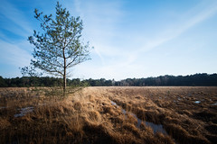 The scout (kceuppens) Tags: longexposure sky tree nature landscape big nikon outdoor natuur boom filter le lee antwerp lucht antwerpen heide landschap stopper kalmthout 1635 kalmthoutseheide d810 buitenlucht leefilter nikker nikond810 bigstopper nikkor1635f4vr