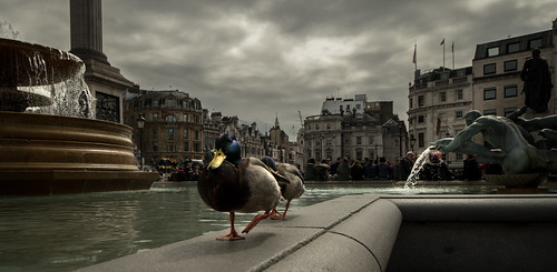 Trafalgar Square Guided Duck Tour