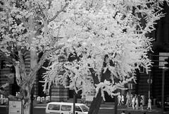 DSC01327 (zkj102) Tags: city tree rain ir 3d cityscape shanghai stereo infrared htconex
